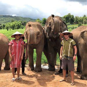 Elephant, couple, forest background